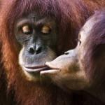 Самая добрая фотоподборка: животные и их поцелуйчики
