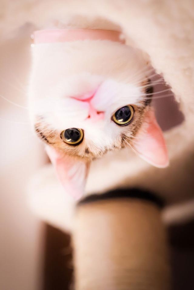 1395086240_cat-portraits-seiji-mamiya-4__880