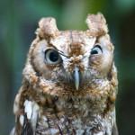 Животные дня: самые необычные птицы — совы