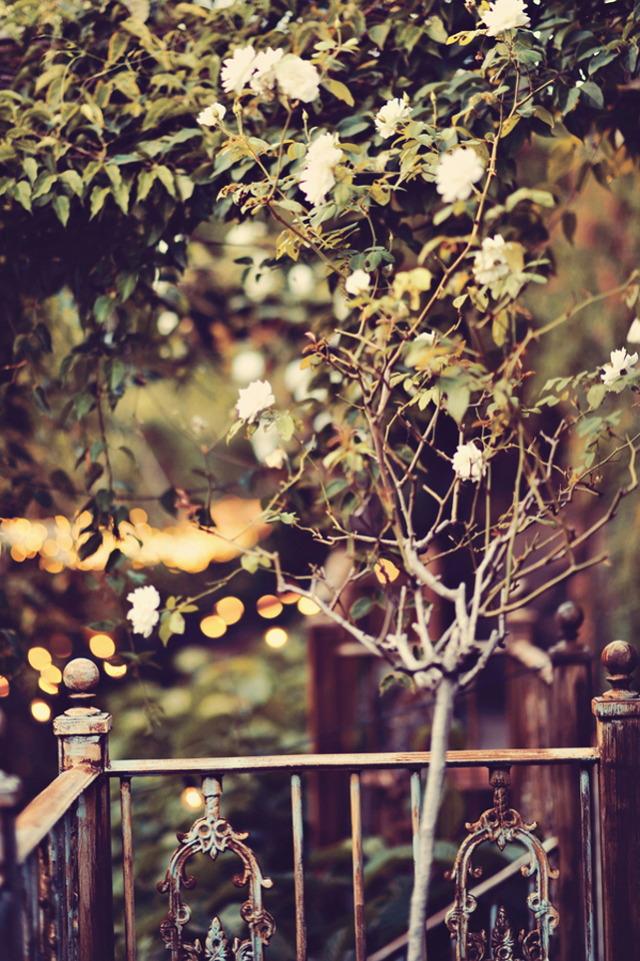 7 Foliage-at-Haiku-Mill-599x900