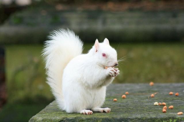 albino-animals-3-640x426