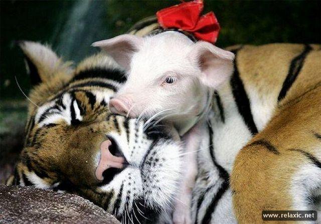 animals_032
