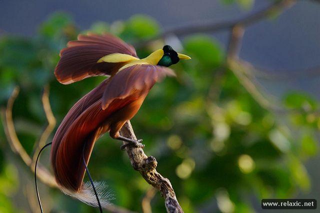 beautiful-nature_007