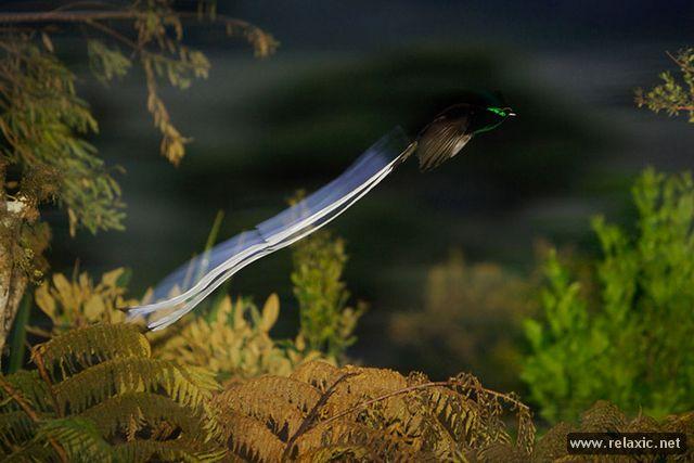 beautiful-nature_012