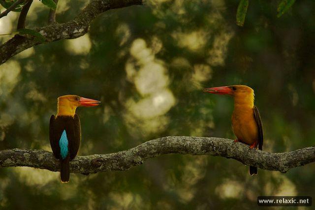 beautiful-nature_020
