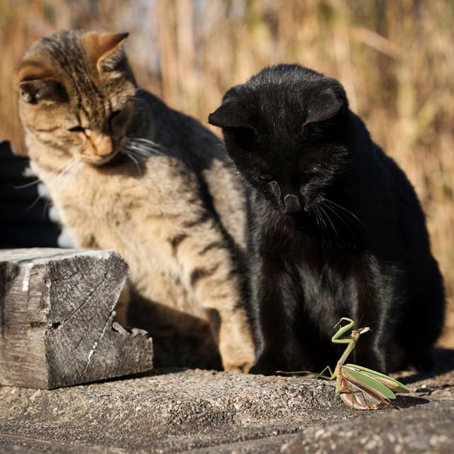 cat-portraits-seiji-mamiya-13_1