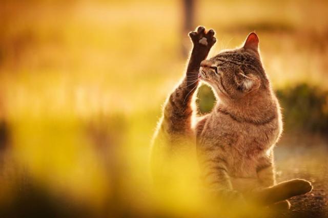 cat-portraits-seiji-mamiya-2-672x448_1