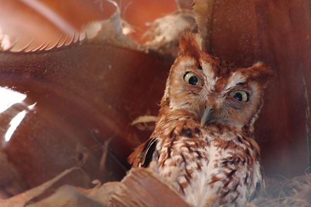 owls03_1