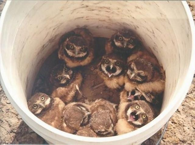 owls06_1
