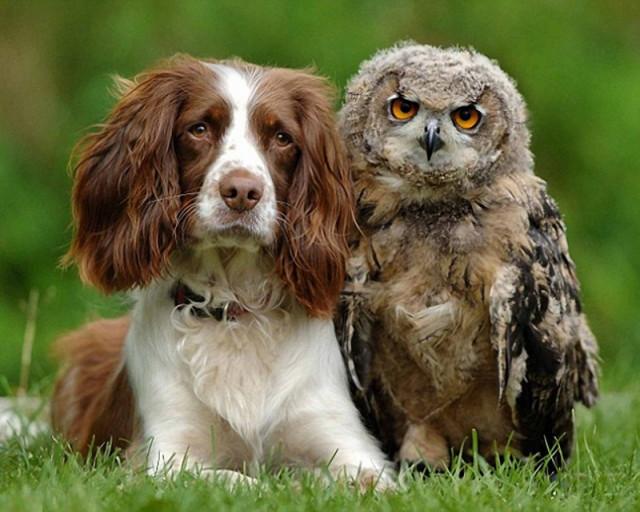 owls07_1