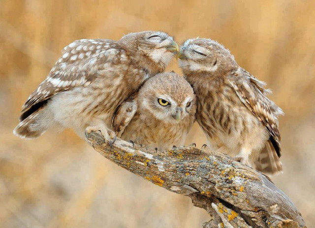 owls12_1