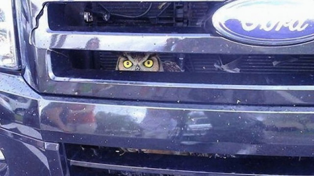 owls13_1