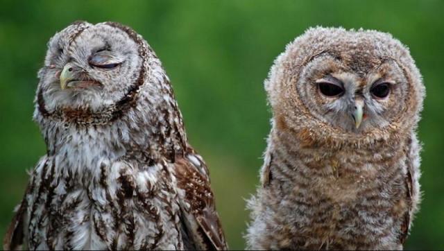 owls17_1