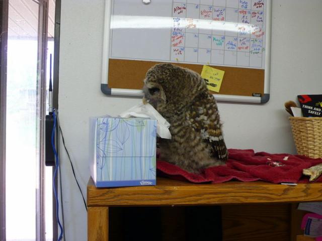 owls18_1