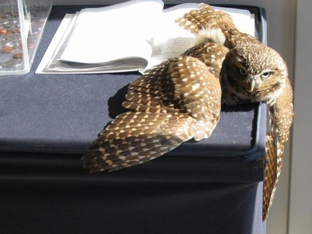 owls19_1