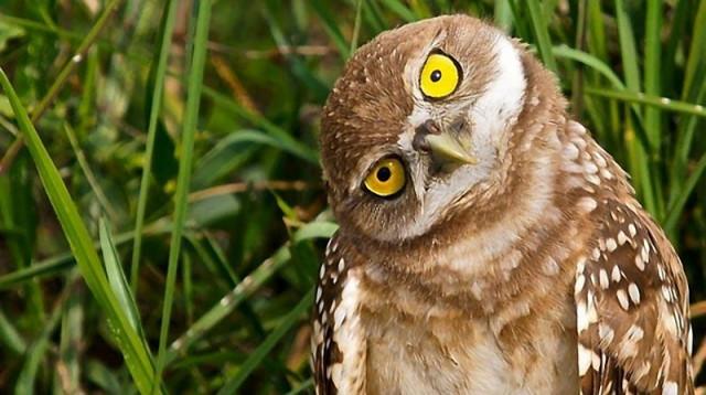 owls21_1