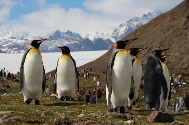 pingviny_19_1