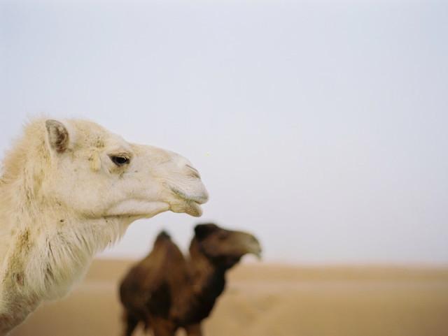 morocco-on-film-by-birgit-hart-via-marinagiller.com-04_1.com-04