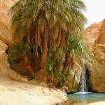 Оазис Шебика в Тунисе — истинное чудо природы