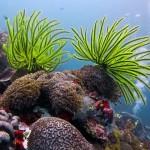 Самый потрясающий Барьерный риф мира— вБелизе
