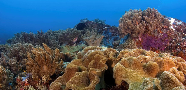 soft coral on reef with view on the surface. Philippines