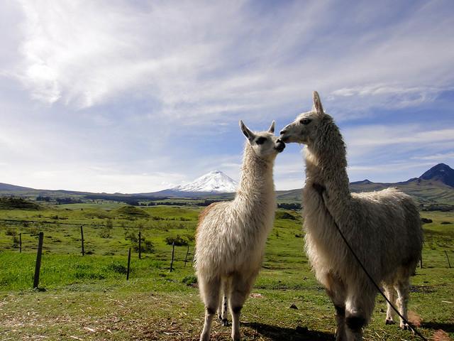Volcano-Cotopaxi-Ecuador_1