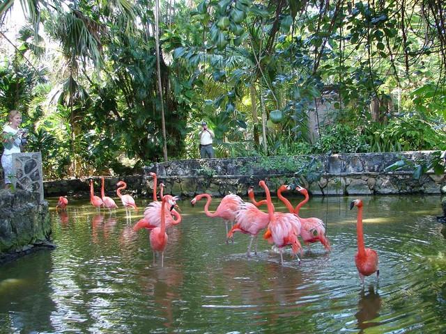 flamingo-v-sadah-Ardastra_1