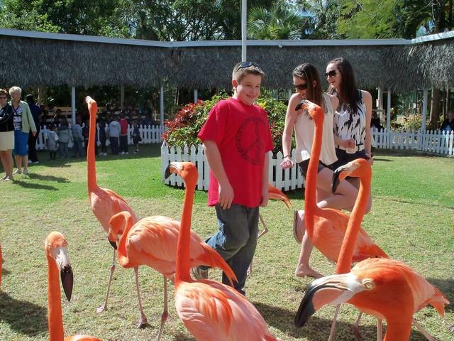 flamingos-Ardastra-Gardens_1