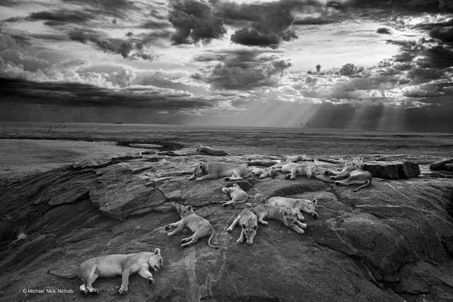 natural-history-museum-wildlife-photographer-of-the-year-2014-designboom-04_1