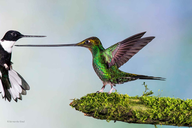 natural-history-museum-wildlife-photographer-of-the-year-2014-designboom-10_1