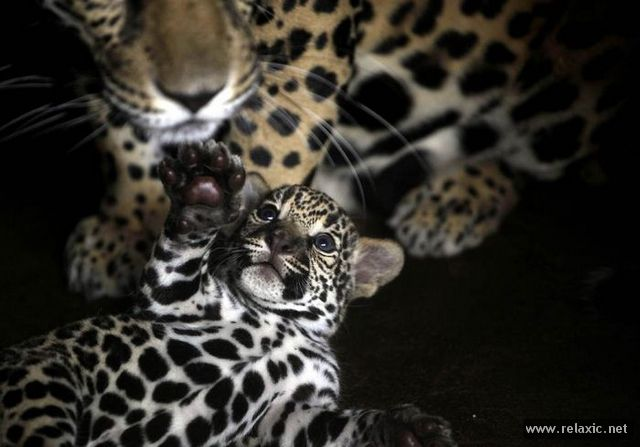 Animals_with_babies_015
