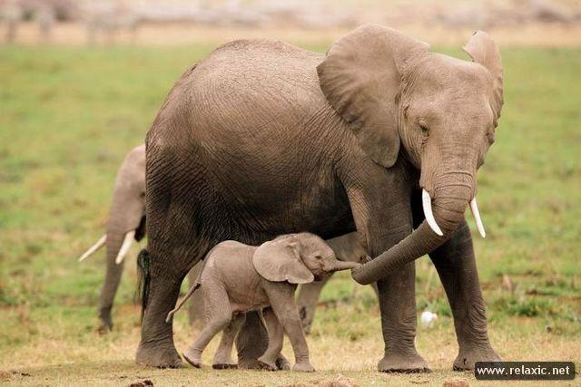 animal-babies_015