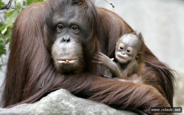 animal-babies_027