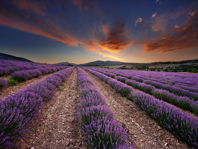 provence_001