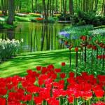 Нидерландский королевский парк цветов Кёкенхоф