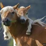 Родительские чувства: нежные и добрые снимки животных со всего Света