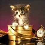 Идеализм в фотографиях Боба Гараса: любовь к животным обязательна