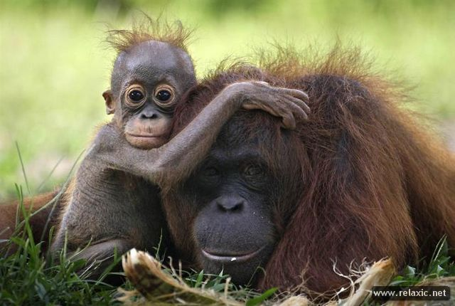 Animals_with_babies_009