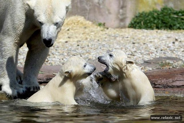 Animals_with_babies_010