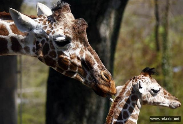 Animals_with_babies_018