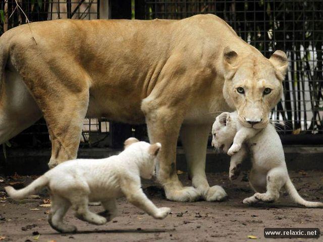 Animals_with_babies_019