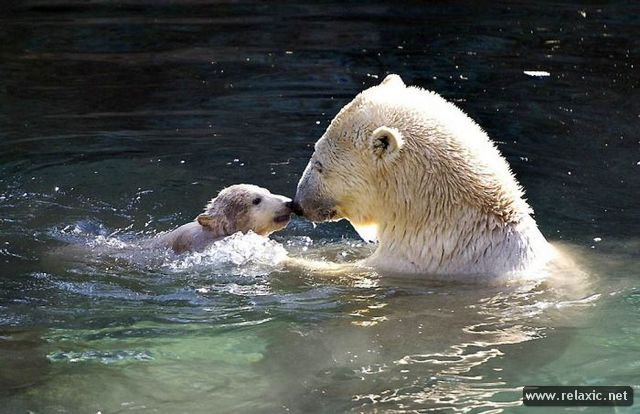 Animals_with_babies_021