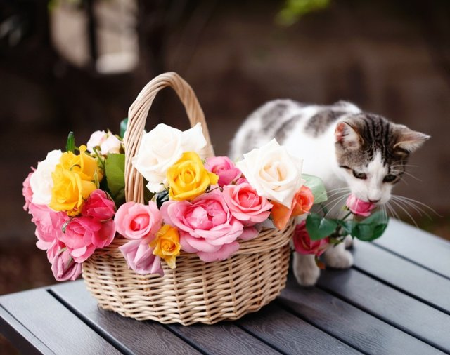 Cats_Sniffing_Flowers_01