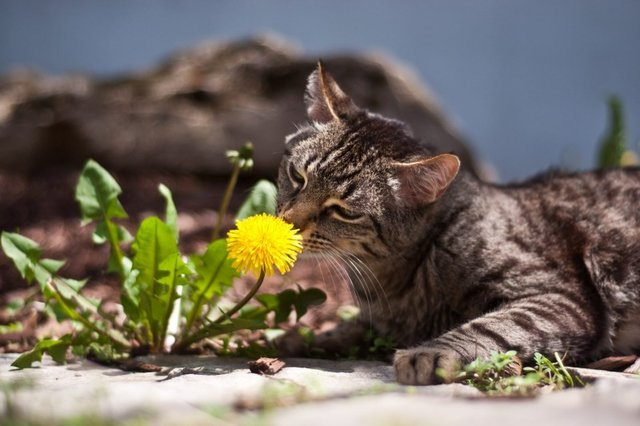 Cats_Sniffing_Flowers_03