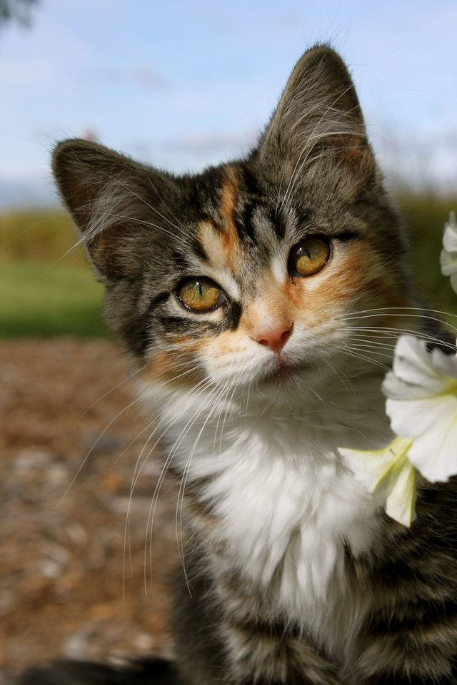 Cats_Sniffing_Flowers_04