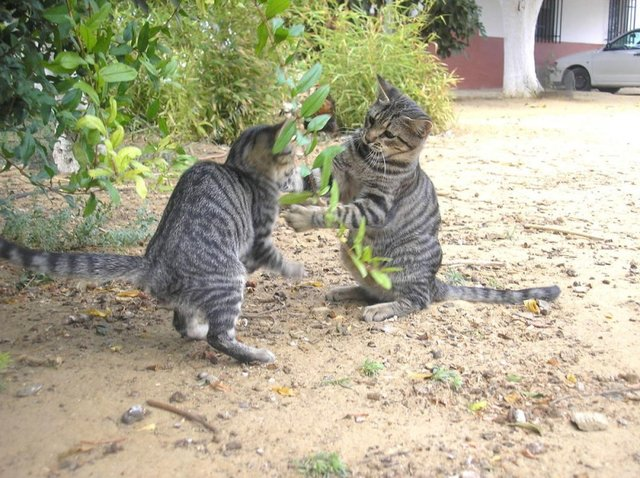 Cats_Sniffing_Flowers_06