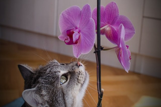 Cats_Sniffing_Flowers_07