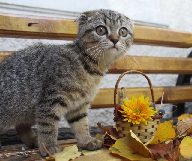Cats_Sniffing_Flowers_08