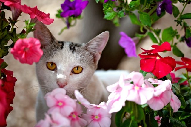 Cats_Sniffing_Flowers_10