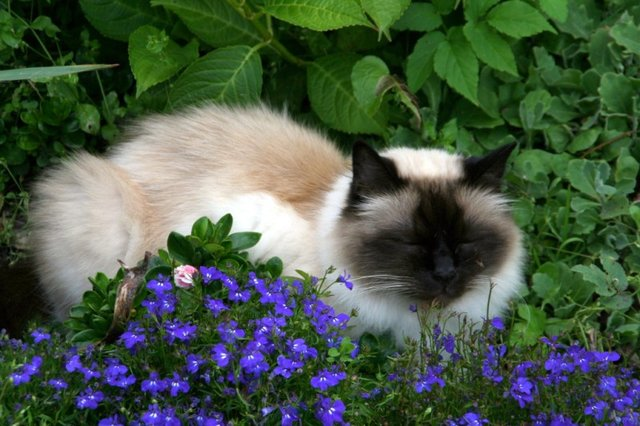 Cats_Sniffing_Flowers_11